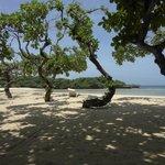 Strand met schaduw van de bomen