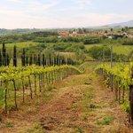 Vista frontal desde los viñedos