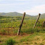 Vista lateral desde los viñedos