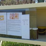 Mt Kaputar beekeeper, a tasty surprise and help yourself. About 25km from Narrabri