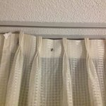 bug in curtains
