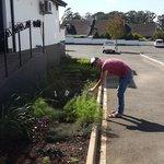 Hotel has their own Herb garden