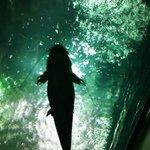 El gran bagre del río amazonas
