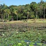 Lago das Ninféias