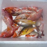 What a catch! Fishes caught on sunset fishing trip using hand lines
