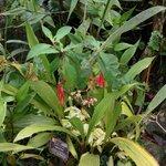 Machu Picchu-baby orchids