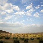 Preciosa vista de los olivares