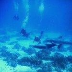 Duiken met dolfijnen, foto gemaakt door Sayed