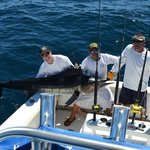 250lb striped marlin realeaed safely