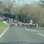 The biggest traffic jam you'll see!