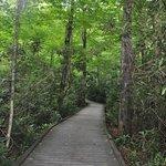 Dingmans Falls Walk