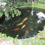 Fish in small pond