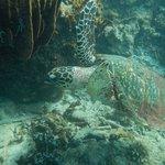 Turtle in the sea!