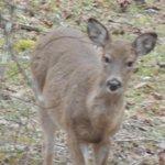 Friendly little deer