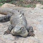 Iguana=)