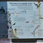 Many types of Seabirds
