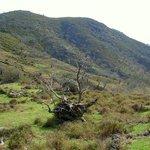 Arbol Singular en la Sierra de Casas del MOnte