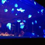 Jelly fish tank