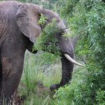 Elephants on the hotel organized safari