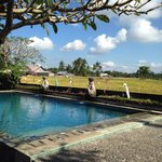 enjoy the peaceful moment at the pool with ricefield view.