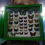 Insect exhibit
