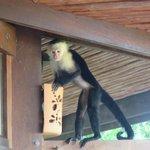 Monkey visiting one morning