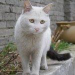 Cute cat in Gongga hostel