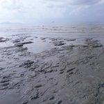the beach is like a mud swamp