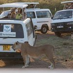african home adventure safaris vans