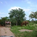"The ""Resident"" Elephants outside the camp"