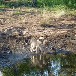 Couple of Lion cubs, spotted on our very first drive out