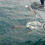 Dolphins right up by the boat!