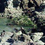 Baby fur seals