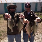 White bass on Bull Shoals