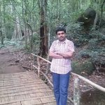 On a forest bridge