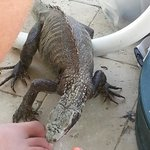 My 17 year old son and I loved the iguanas by the pool. Quite entertaining. Also a resident cat