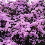 Fantastic shrubs