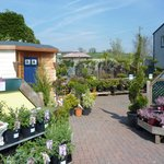 Top Plant Area and Tea Garden