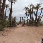 Balade désert & palmeraie - 21.04.2014