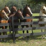 Happy Acres Ranch