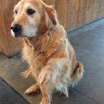 Rosie Dyment, loyal and loving farm dog