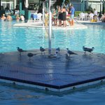 SeaGulls on pool fountain