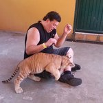 Lion cub gnawing on my leg
