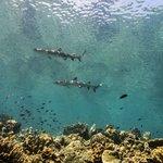Dive spot: Barracuda Point - Sipadan