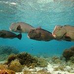 Dive spot: Coral Gardens - Sipadan