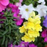 Beautiful flowers were everywhere!