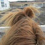 Birna the horse