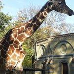 Giraffe und nettes Gebäude