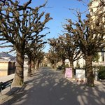 trees in front of palace lucerne