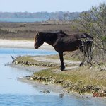 horse nap by marsh boardwalk
